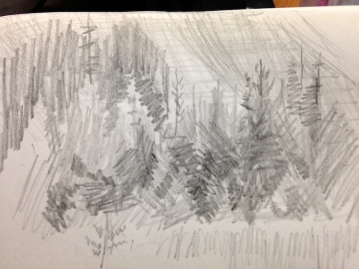 abstract spruce forest