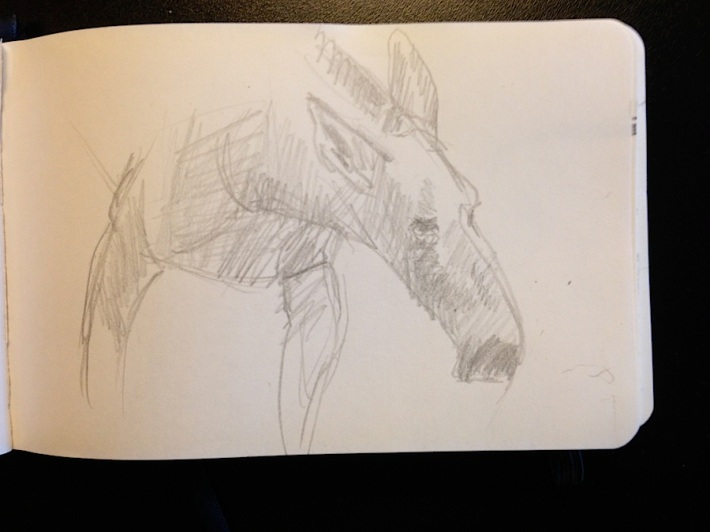 moose -- a weird animal to draw -- trying NOT to make it look like a horse!