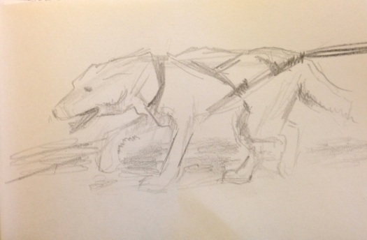 sled dog in training
